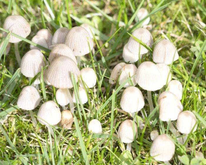 Eurajoki2_valkoiset sienet 2