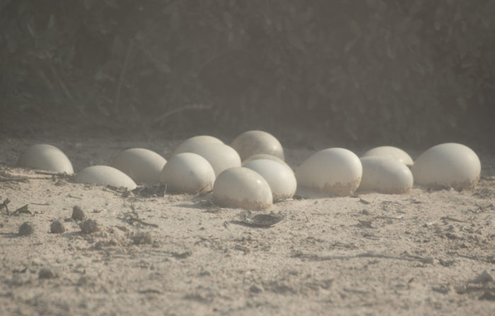 Linnut_Emun munat