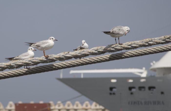 Linnut_naurulokit ja laiva